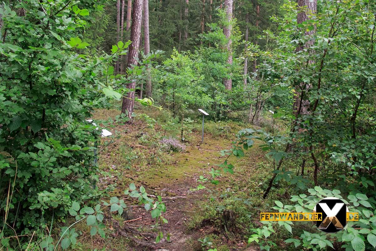 Oase der Sinne Suedlicher Steigerwald Wanderweg Muenchsteinach (11)