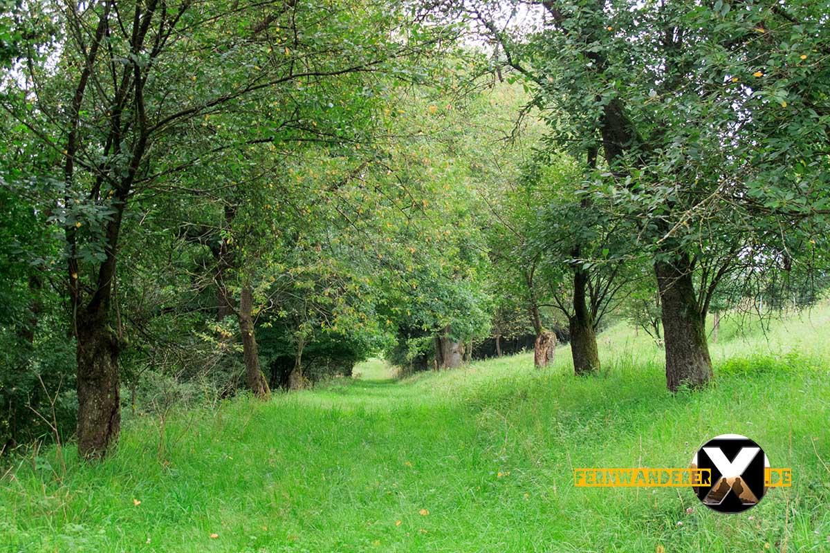 Oase der Sinne Suedlicher Steigerwald Wanderweg Muenchsteinach (13)