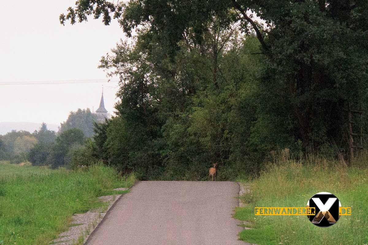Oase der Sinne Suedlicher Steigerwald Wanderweg Muenchsteinach (21)