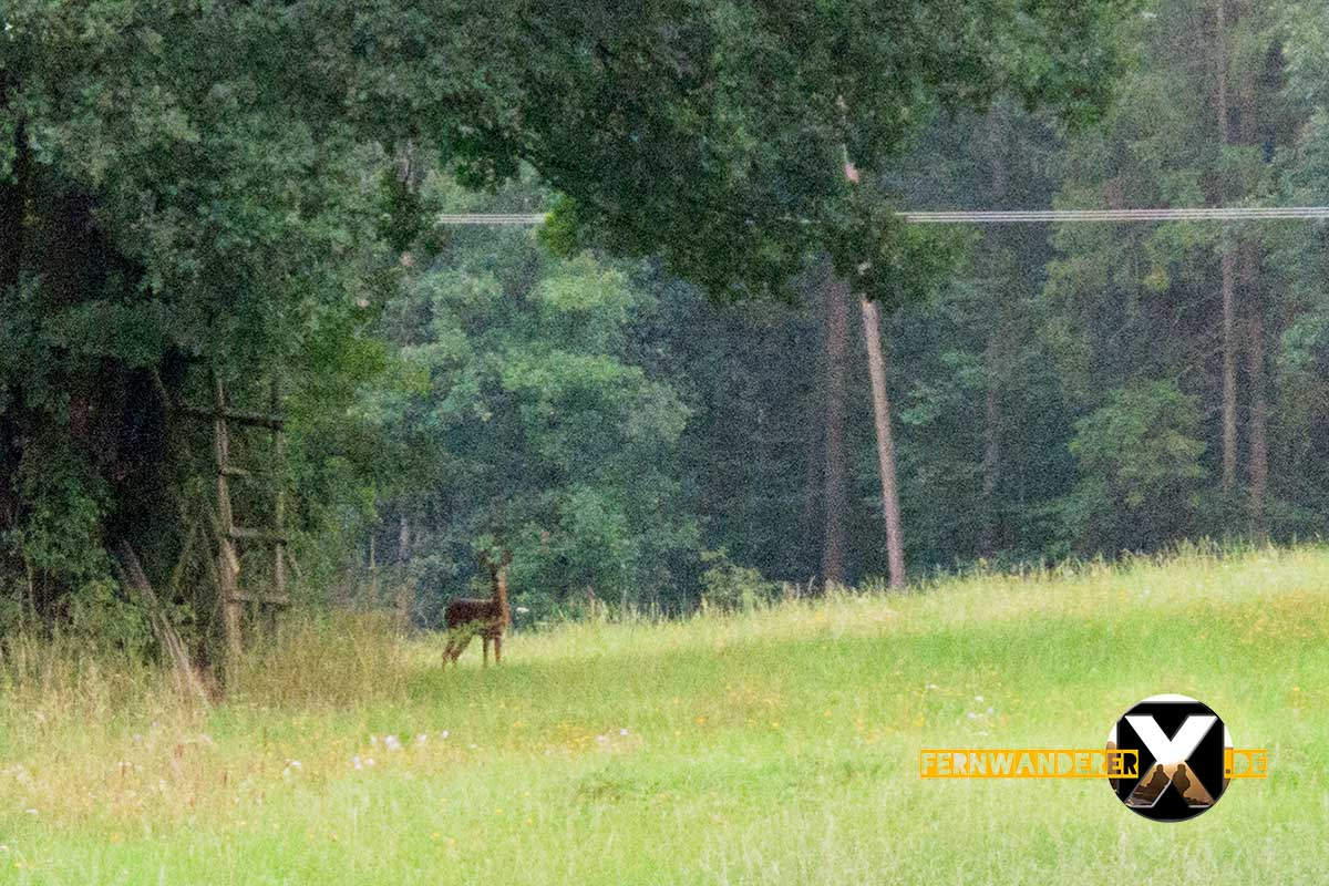 Oase der Sinne Suedlicher Steigerwald Wanderweg Muenchsteinach (22)