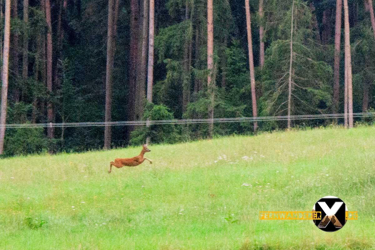 Oase der Sinne Suedlicher Steigerwald Wanderweg Muenchsteinach (23)