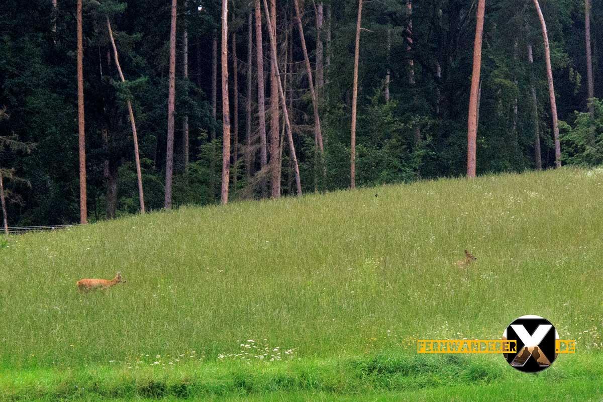 Oase der Sinne Suedlicher Steigerwald Wanderweg Muenchsteinach (24)