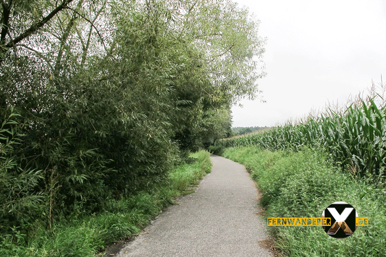 Uehlfelder carp circular path (1)