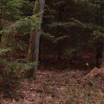 Defcon 5 Bivy tent test review biwakzelt bushcraft tarp tarnung wasserdicht 150x150 - Das Defcon 5 Biwakzelt-Bivi Zelt Gen III - Snipers nest -