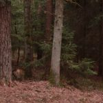 biwakzelt bushcraft tarp 4 1 150x150 - Das Defcon 5 Biwakzelt-Bivi Zelt Gen III - Snipers nest -