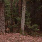biwak isolated bush craft tarp 4 1 150x150 - The Defcon 5 bivouac -Bivi tent gene III - Snipers nest -