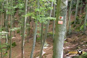 Höhenglücksteig Via Ferrata Klettersteig in der Fränksichen Schweiz Teil 1 teil 2 Teil 3 Schwierigkeit 24 300x200 - Höhenglücksteig in der Fränksichen Schweiz-Klettersteig-Via Ferrata