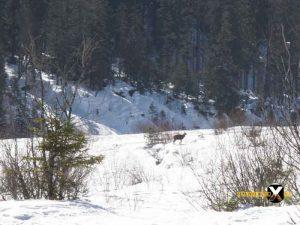 Schneeschuh tour Wimbachgries Berchtesgaden Ramsau Berchtesgadener Land 18 300x225 - Schneeschuhtour - Berchtesgadener Land - Wimbachgries