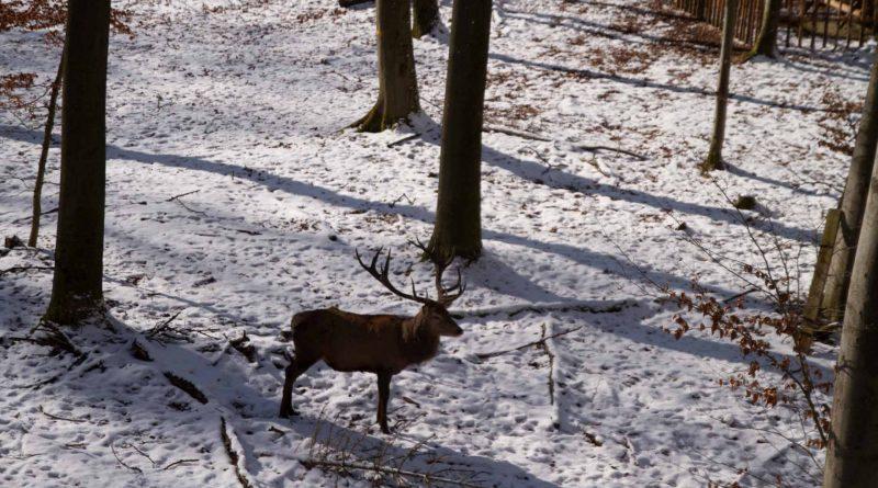 Baumwipfelpfad Steigerwald im Naturpark at naturepark Familiy Holiday excursion destinations familienfreundlich 9 800x445 - Baumwipfelpfad Steigerwald - Ausflugsziel für Familien und Wanderer