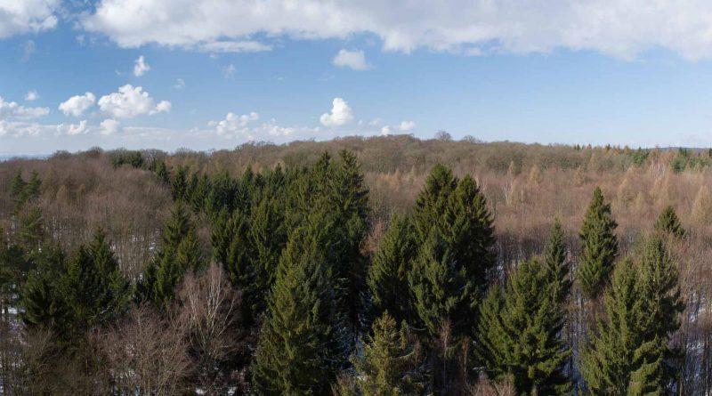 Baumwipfelpfad steigerwald panorama aussicht 3 800x445 - Baumwipfelpfad Steigerwald - Ausflugsziel für Familien und Wanderer