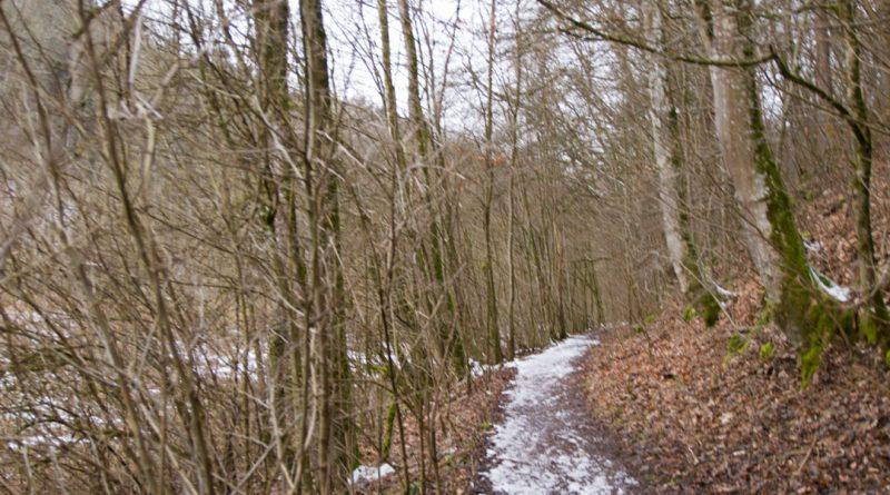 Lillachtal lillachquelle sinterstufen weisenohe tour wandern 7 800x445 - SINTERSTUFEN-Wanderung Weißenohe - Lillachtal - Lillachquelle - Lilling