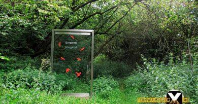 Oase der Sinne Suedlicher Steigerwald Wanderweg Muenchsteinach 16 390x205 - Oase der Sinne Wanderweg Münchsteinach - Südlicher Steigerwald