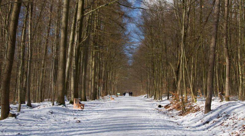 Baumwipfelpfad Steigerwald im Naturpark at naturepark Familiy Holiday excursion destinations familienfreundlich 1 800x445 - Baumwipfelpfad Steigerwald - Ausflugsziel für Familien und Wanderer