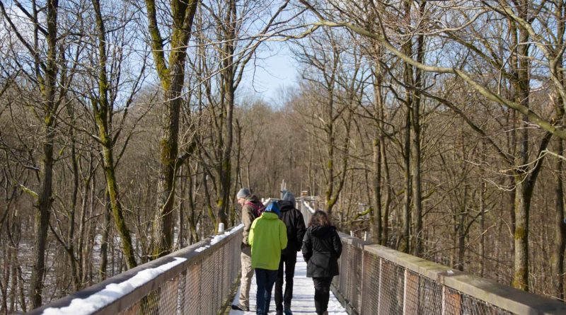 Baumwipfelpfad Steigerwald im Naturpark at naturepark Familiy Holiday excursion destinations familienfreundlich 4 800x445 - Baumwipfelpfad Steigerwald - Ausflugsziel für Familien und Wanderer