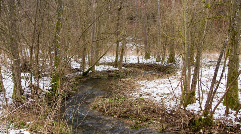 Lillachtal lillachquelle sinterstufen weisenohe tour wandern 18 800x445 - SINTERSTUFEN-Wanderung Weißenohe - Lillachtal - Lillachquelle - Lilling