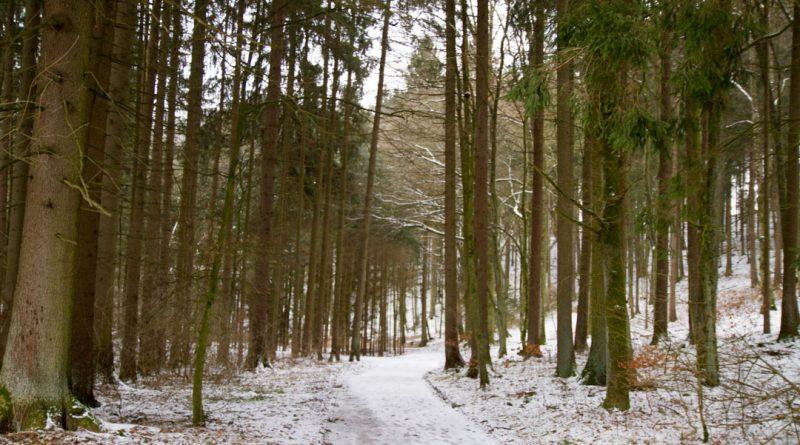 Lillachtal lillachquelle sinterstufen weisenohe tour wandern 3 800x445 - SINTERSTUFEN-Wanderung Weißenohe - Lillachtal - Lillachquelle - Lilling