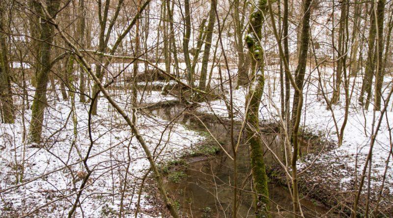 Lillachtal lillachquelle sinterstufen weisenohe tour wandern 8 800x445 - SINTERSTUFEN-Wanderung Weißenohe - Lillachtal - Lillachquelle - Lilling
