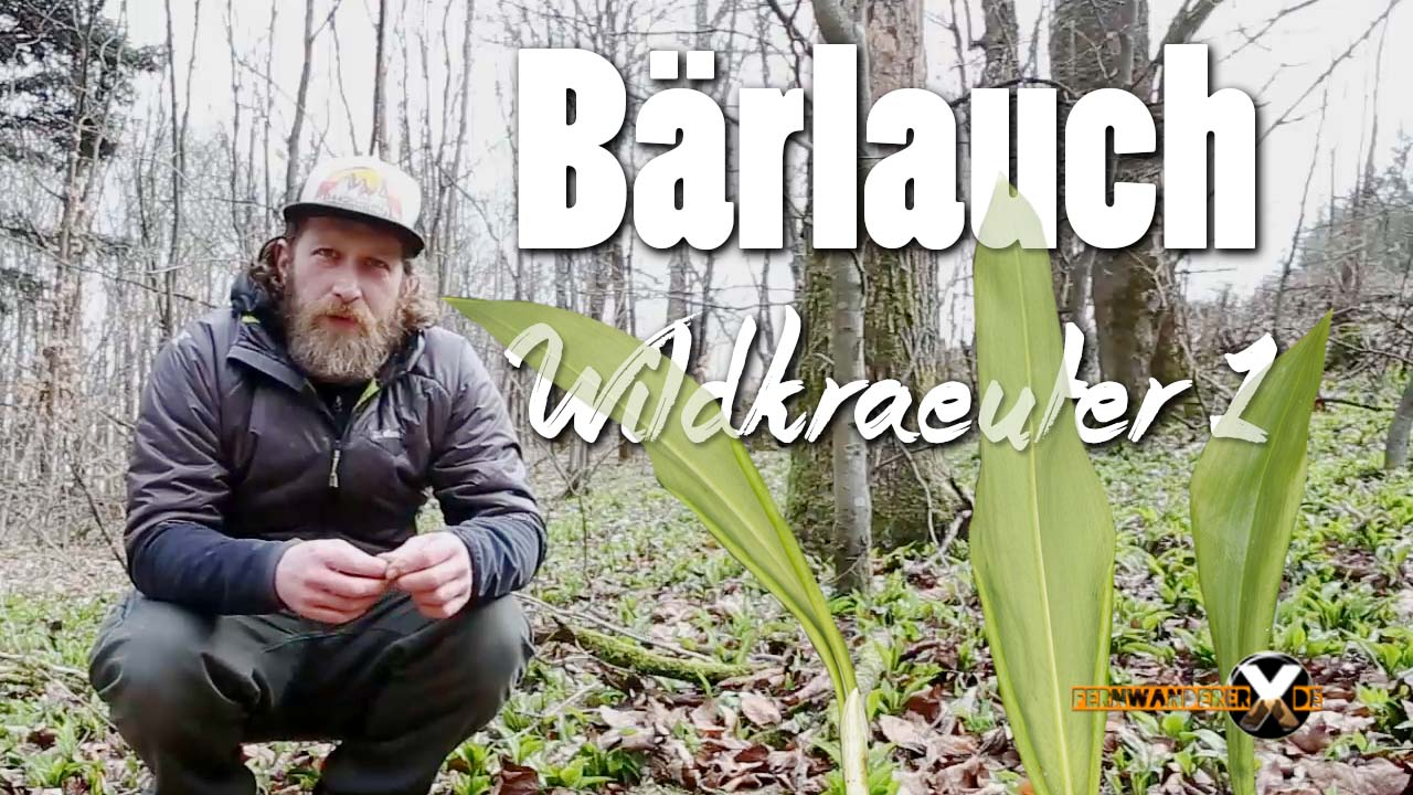 Bärlauch sammeln - Wildkräuter und Heilpflanzen rezepte