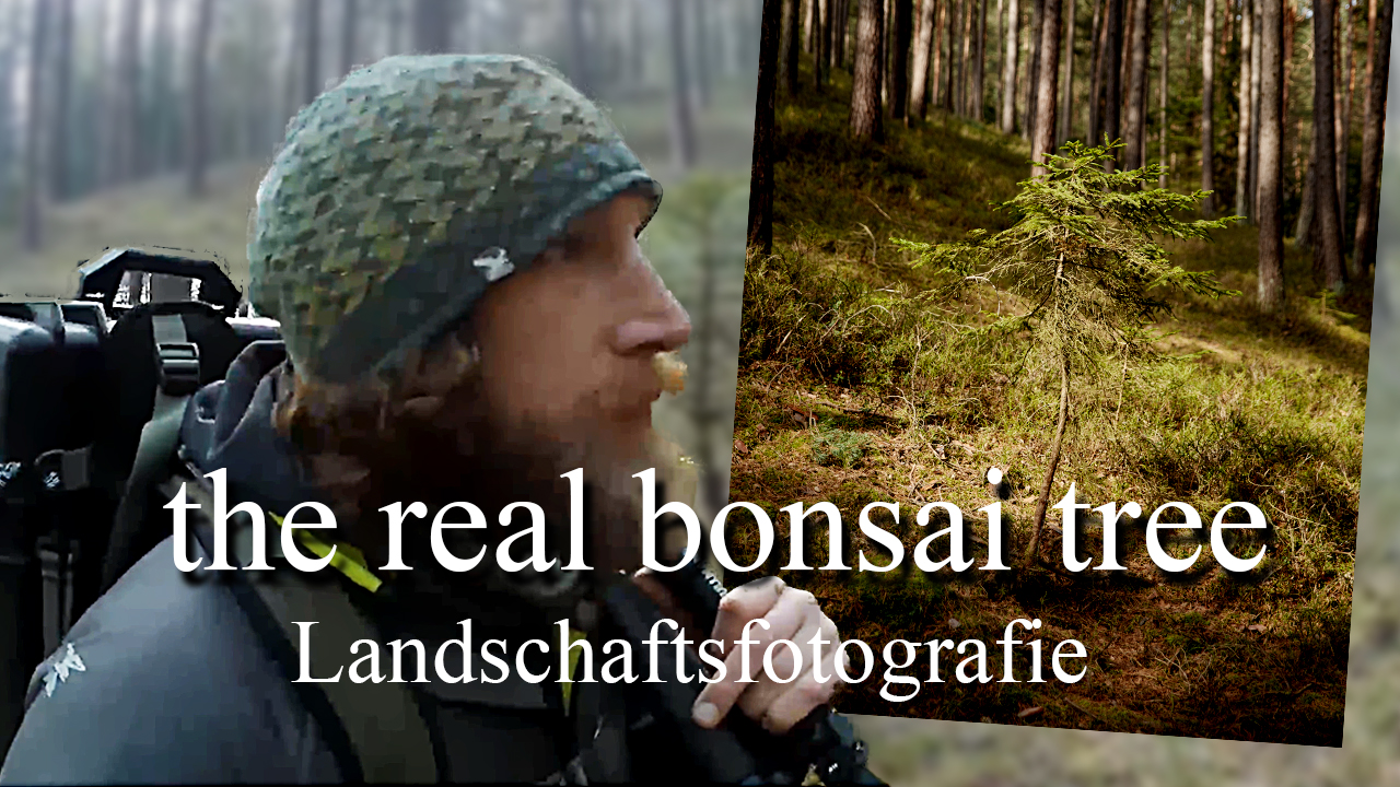 Landschafstfotografie The real bonsai tree 2021 FernwandererX de