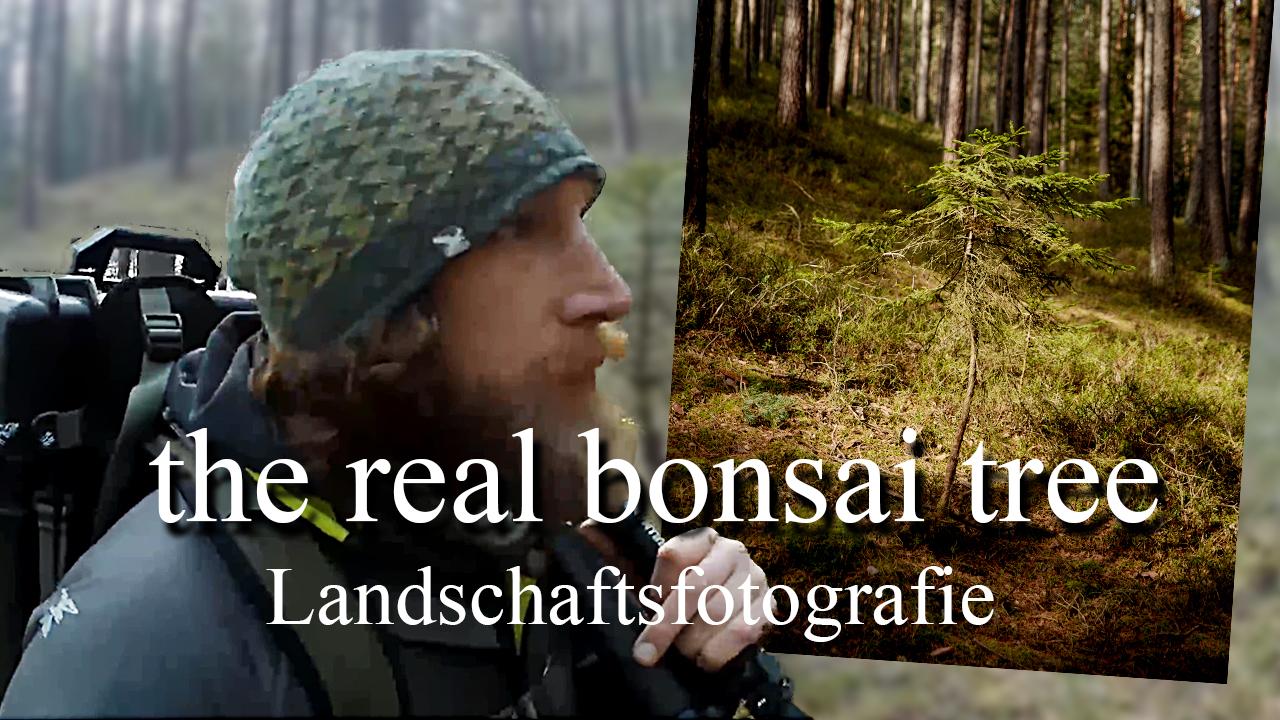Landschafstfotografie The real bonsai tree 2021 FernwandererX de