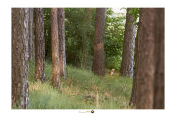 Jungfüchse am Bau_ Fotografie_wildlife deutschland fotograf